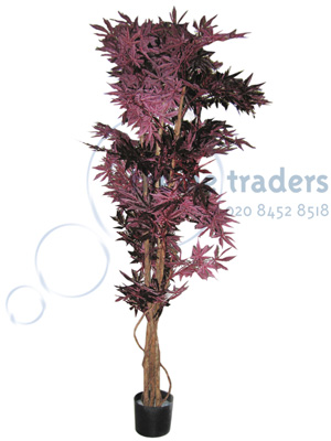 Acer trees Props, Prop Hire