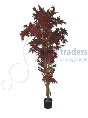 Red acer tree Props, Prop Hire