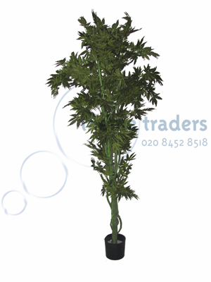 Green acer tree Props, Prop Hire