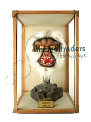 Werewolf Head in Display Cases Props, Prop Hire