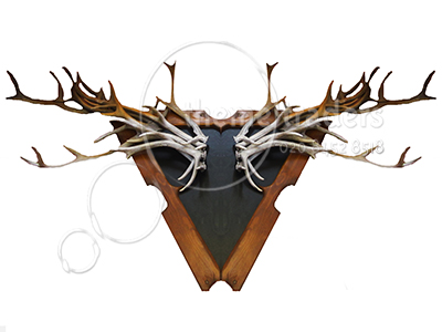 Mounted Antlers Props, Prop Hire